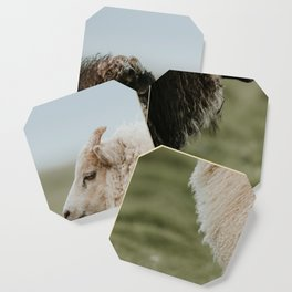 Sheeply in Love - Animal Photography from Iceland Coaster