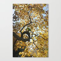 black and gold Canvas Prints featuring Black & Gold by Max Ross