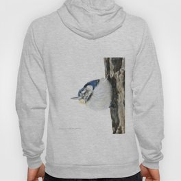 Cutie Pie the Nuthatch by Teresa Thompson Hoody