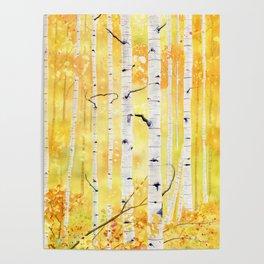 Autumn Birch Poster