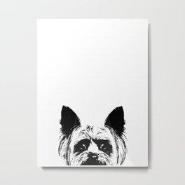 Yorkshire Terrier Dog Metal Print