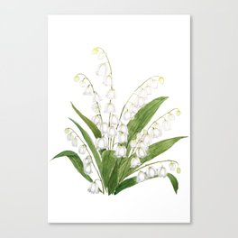 white lily of valley Canvas Print