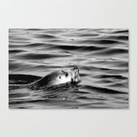 seal Canvas Prints featuring Seal by Phoebe Jones