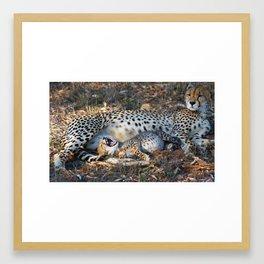 Wittle Baby Cheetah Framed Art Print