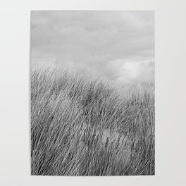 Beach grass - black and white Poster