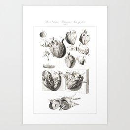 Human Anatomy Art Print HEART ATRIUM VENTRICLE Vintage Anatomy, doctor medical art, Antique Book Pla Art Print