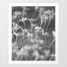 Rain Lilies Art Print