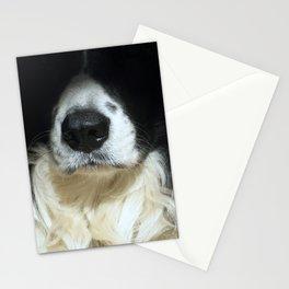 Dog close up Stationery Cards