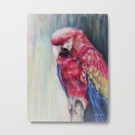 Scarlet's Post Macaw Metal Print