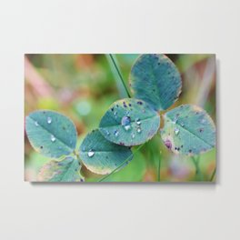 Clover leaves with rain drops Metal Print