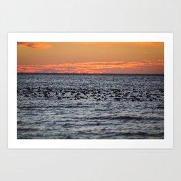 Blue-bill Duck Sunrise Art Print