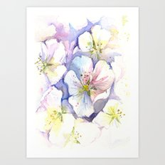 Cherry Blossoms Flowers Spring Floral Art Print
