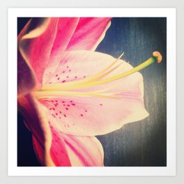 Stargazer Lily - iPhoneography Art Print