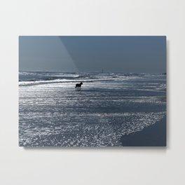 Dog on the Beach Metal Print