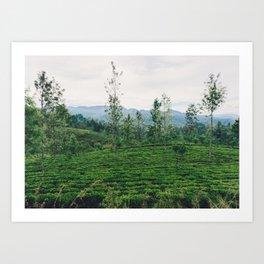 Tea Fields of Sri Lanka, View from the Ella to Kandy Train Art Print