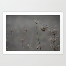 Queen's Anne's lace Art Print