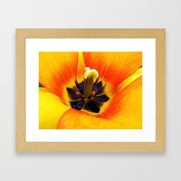 Heart of a Tulip ~ Macro Shot of Stamen & Pistil ~ Flora Photography  Framed Art Print