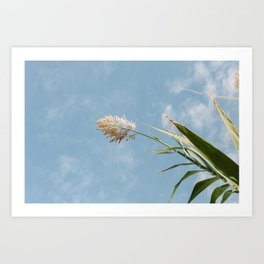 Wildflower along the Cliffs in Algarve, Portugal Art Print