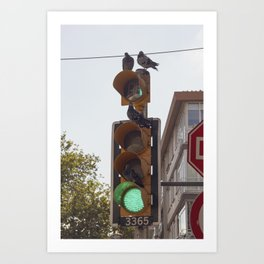 Pigeons apartment life in Istanbul city Art Print