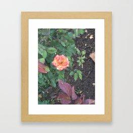 Pink Flower #1 Framed Art Print