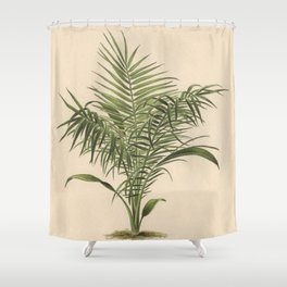1800s Encyclopedia Lithograph of Date Palm Shower Curtain