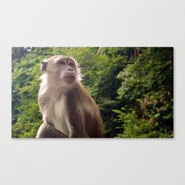 Pensive Primate Canvas Print