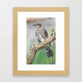 Bulbul on a Branch Framed Art Print