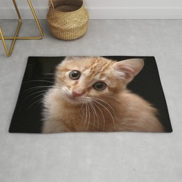 A Cute Kitten Looks Longingly at the Camera Rug