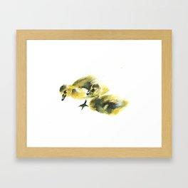 Canadian Goslings Framed Art Print