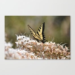 Swallowtail butterfly 2 Canvas Print