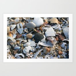 Shell Menagerie Art Print