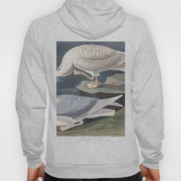 White winged silvery gull, Birds of America, Audubon Plate 282 Hoody