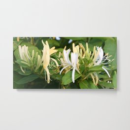 Closeup shot of Lonicera European Honeysuckle Flower Metal Print