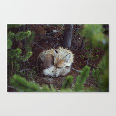 Sleeping Fox Canvas Print