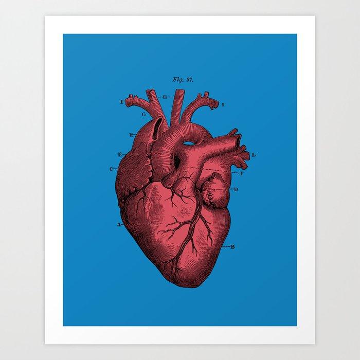Vintage Anatomical Heart Illustration Art Print By Digitalcrafts