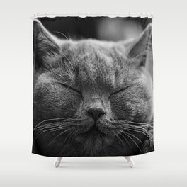 Cat, Cats - Love Cats Shower Curtain
