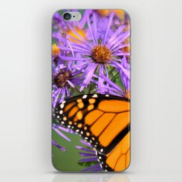 Monarch Butterfly on Wild Asters (square) iPhone Skin