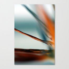 Strelizia Canvas Print
