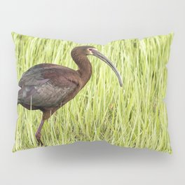 Strutting White-faced Ibis in Breeding Plumage Pillow Sham