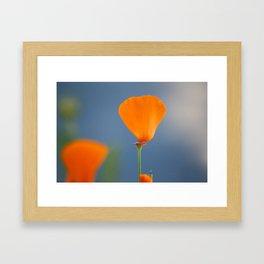 California Poppy Dreaming Framed Art Print