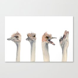 Drama Queen Canvas Print