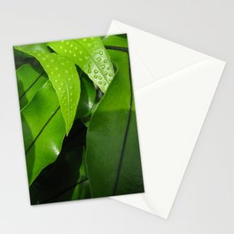 From the Conservatory #42 Stationery Cards