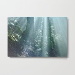 Misty Forest in Northern California Metal Print