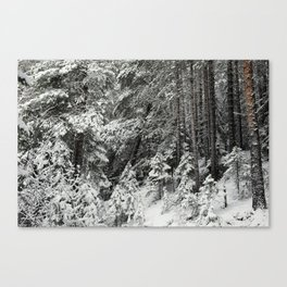 After the snowfall in the taiga forest Canvas Print