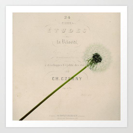 a dandelion Art Print