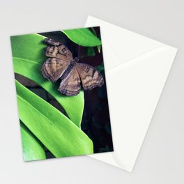 Damaged Stationery Cards