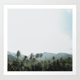 Palm Tree Jungle Colombia Art Print