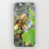 plant iPhone & iPod Skins featuring Plant by BACK to THE ROOTS