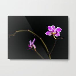 Night Orchid Metal Print