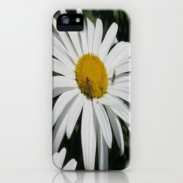 Close Up Common Daisy with Winged Insects iPhone Case